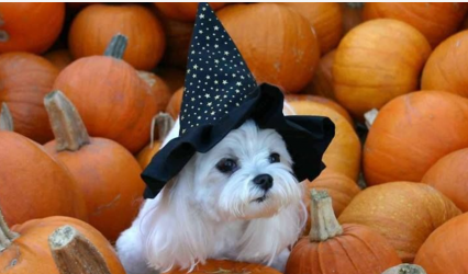 Howl-o-ween Pawty